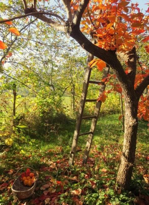 image automne